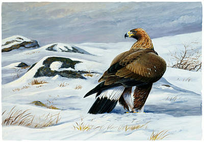 Golden Eagle Art Print by Dag Peterson