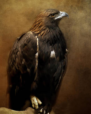 Photograph - Golden Eagle by TnBackroadsPhotos