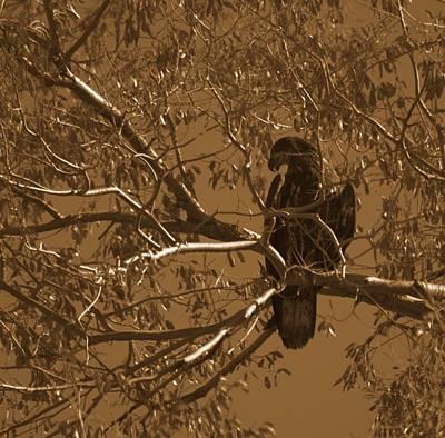 Photograph - Golden Eagle by Eric Tressler