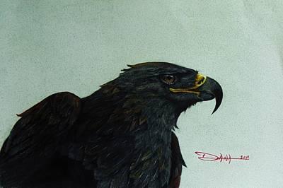 Mixed Media - Golden Eagle- Head Study by Dana Newman