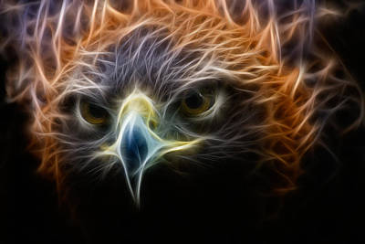 Photograph - Golden Eagle In Artsy Mode by Phoo Chan