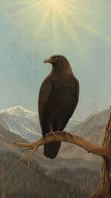 Painting - Golden Eagle by Joseph Rusling Meeker