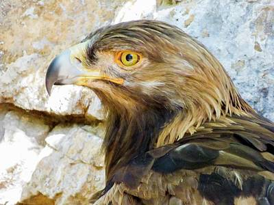 Photograph - Golden Eagle by Kimo Fernandez