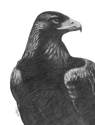 Drawing - Golden Eagle by Lawrence Tripoli