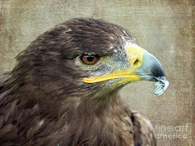Photograph - Golden Eagle by Lynn Bolt