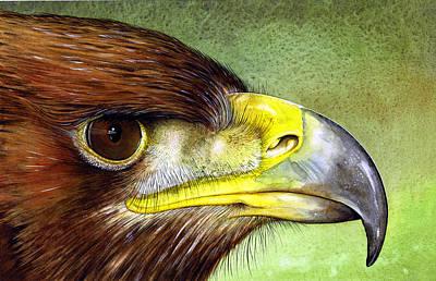 Golden Eagle Painting - Golden Eagle by Paul Dene Marlor
