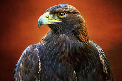 Photograph - Golden Eagle by Peggy Collins