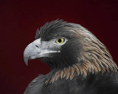 Digital Art - Golden Eagle Portrait 2 by Ernie Echols