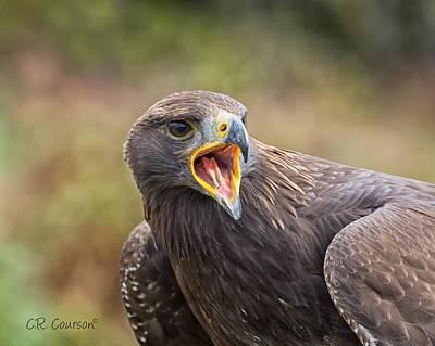 Photograph - Golden Eagle Portrait by CR  Courson