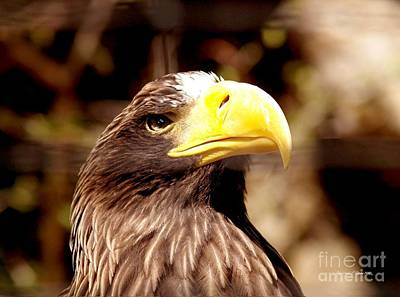Photograph - Golden Eagle Proud by Christine S Zipps
