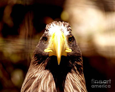 Photograph - Golden Eagle Proud II by Christine S Zipps
