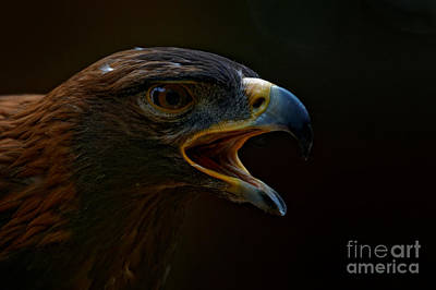 Photograph - Golden Eagle Proud by Sue Harper
