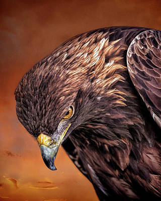 Golden Eagle Sunset Art Print by Pat Eisenberger
