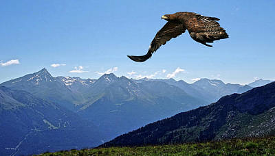 Hawk Mixed Media - Golden Eagle by Thomas Pollart