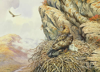 Eagle Painting - Golden Eagles At Eyrie by Carl Donner