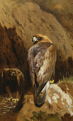 Hawk Painting - Golden Eagles At Their Eyrie by Archibald Thorburn