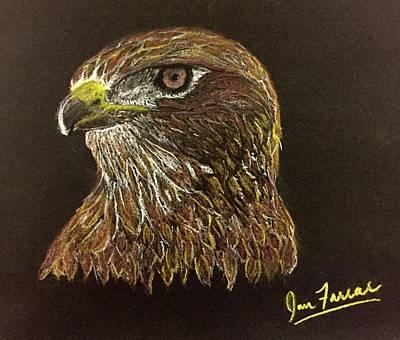 Red-tailed Hawk Drawing - Golden Eye by Ian Farrar