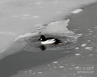 Photograph - Golden Eye Spring Thaw by Leone Lund