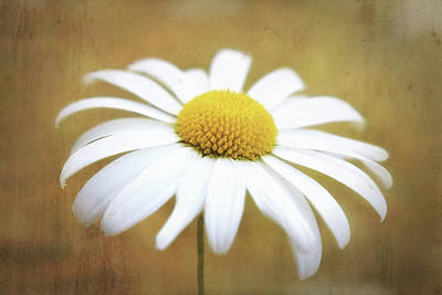 Photograph - Golden Eyed Daisy by Wallaroo Images