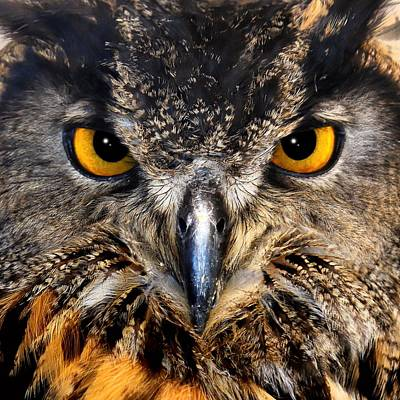 Photograph - Golden Eyes - Great Horned Owl by KJ Swan