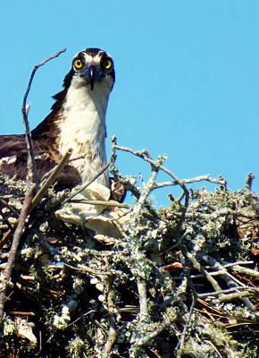 Bird Nest Photograph - Golden Eyes by Karen Wiles