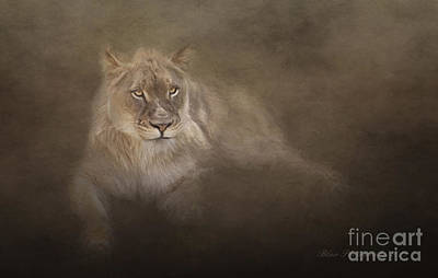 Photograph - Golden Eyes by Linda Blair