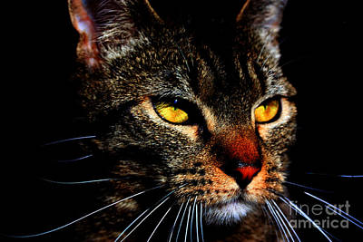Golden Eye Cat Photograph - Golden Eyes by Nick Gustafson