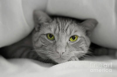 Photograph - Golden Eyes by Paul Cammarata