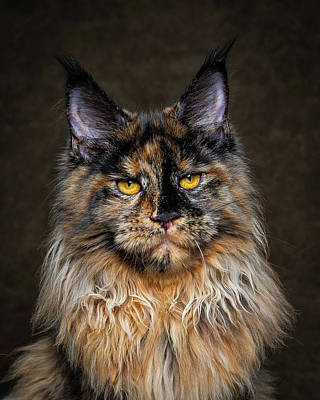 Photograph - Golden Eyes by Robert Sijka