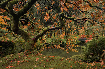 Photograph - Golden Fall At The Garden by Don Schwartz