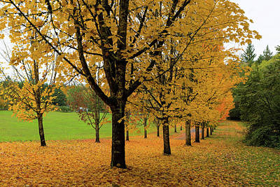 Photograph - Golden Fall Colors On Maple Trees by Jit Lim