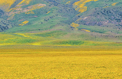 Photograph - Golden Field And Caliente Range by Marc Crumpler