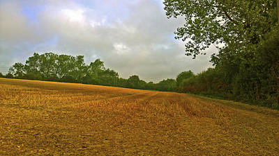 Photograph - Golden Field by Anne Kotan