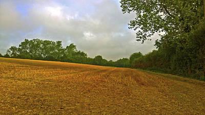 Photograph - Golden Field by Anne Kotan