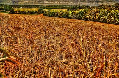 Golden Field In Normandy Art Print