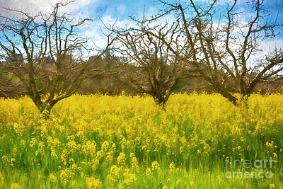 Vineyard Digital Art - Golden Field by Jacque The Muse Photography