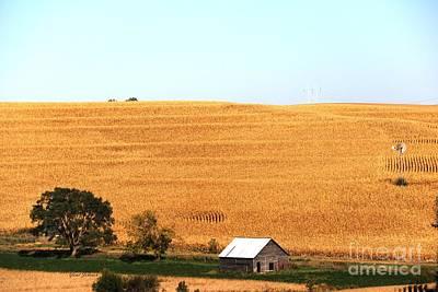Photograph - Golden Field  by Yumi Johnson