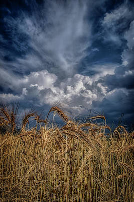 Photograph - Golden Fields by Plamen Petkov