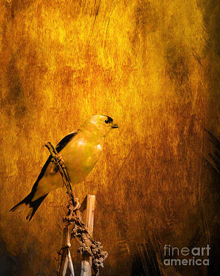 Bif Digital Art - Golden Finch by Wingsdomain Art and Photography