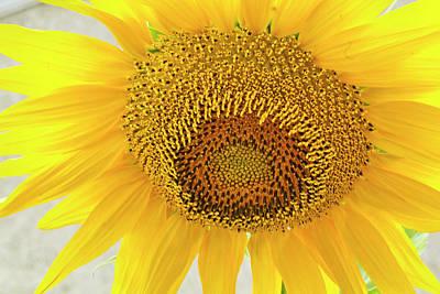 Golden Flower Original by Arthur Bohlmann