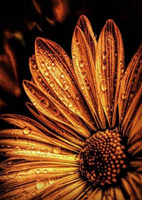 Photograph - Golden Flower by Lilia D