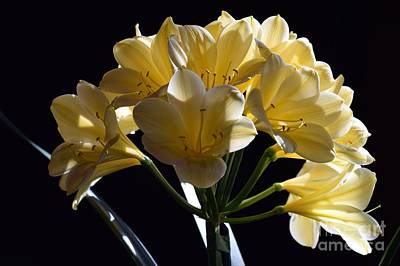 Photograph - Golden Clivia Flowers by Jeannie Rhode