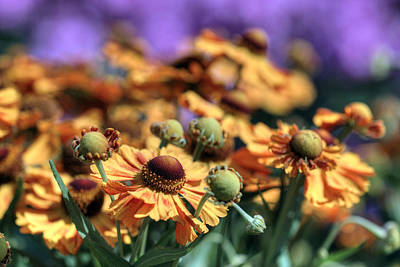 Digital Art - Golden Flowers by Patrick Groleau