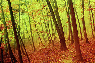 Photograph - Golden Foggy Forest by Jenny Rainbow