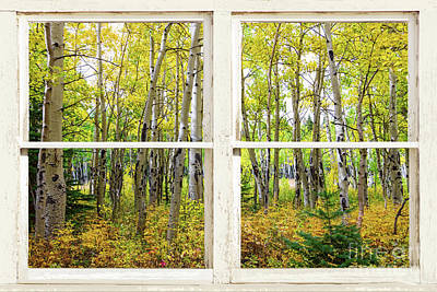 Photograph - Golden Forest Rustic White Window View by James BO Insogna