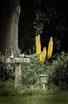 Photograph - Golden Foxtails by Susan McMenamin