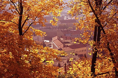 Photograph - Golden Frame Of Autumn by Jenny Rainbow