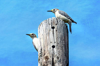Photograph - Golden-fronted Woodpecker Pair - Textured Background by Debra Martz