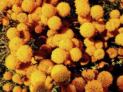 Photograph - Golden Fuzzballs by Mark Blauhoefer