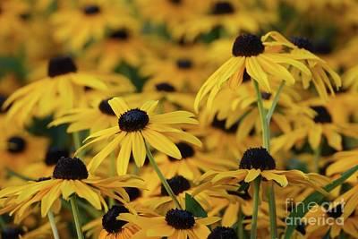 Photograph - Golden Garden by Patricia Strand